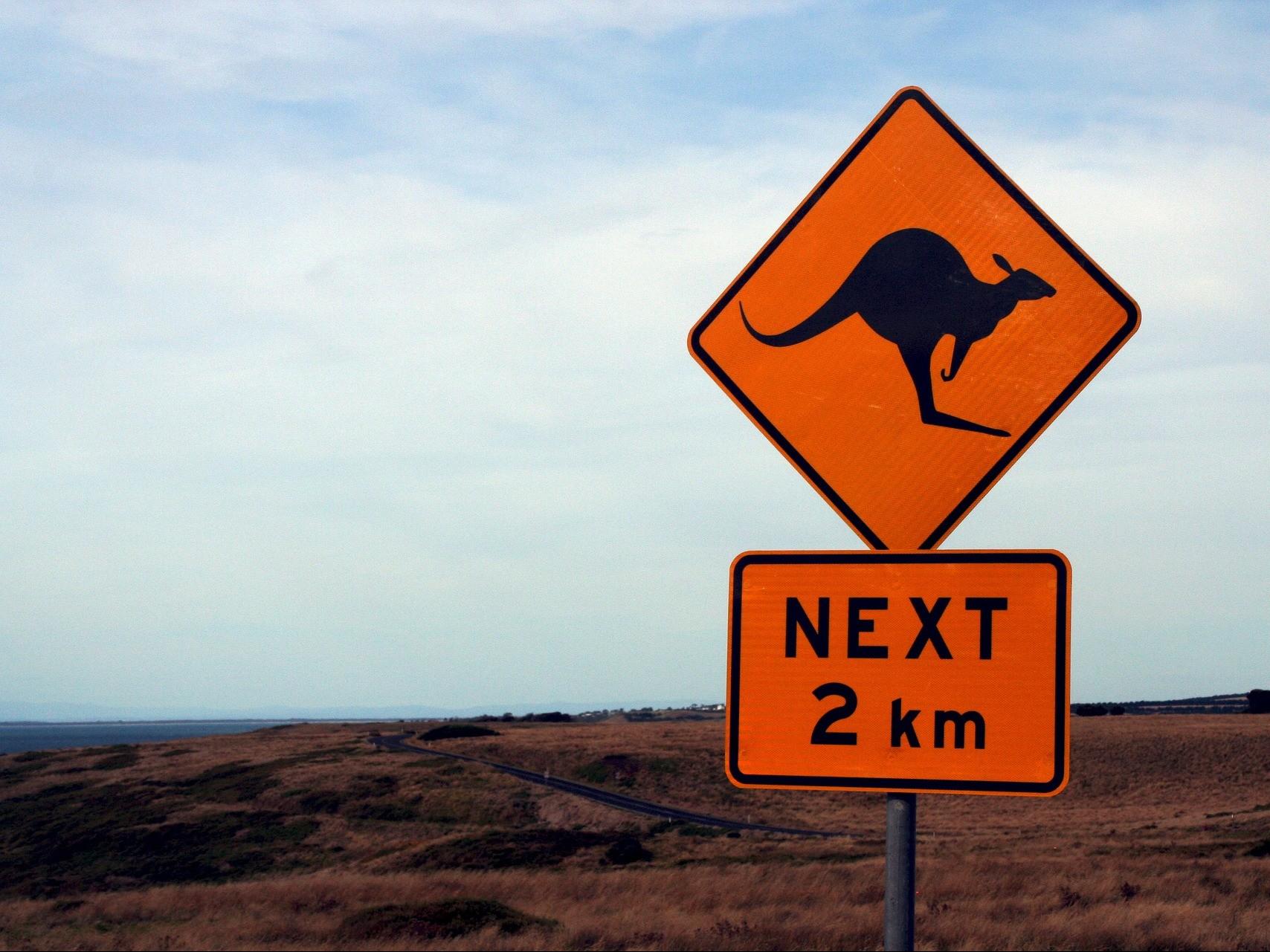 Australie kangoeroe